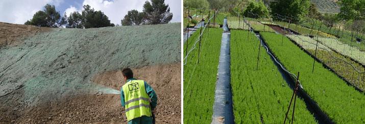 Soluciones forestales, paisajísticas y medioambientales