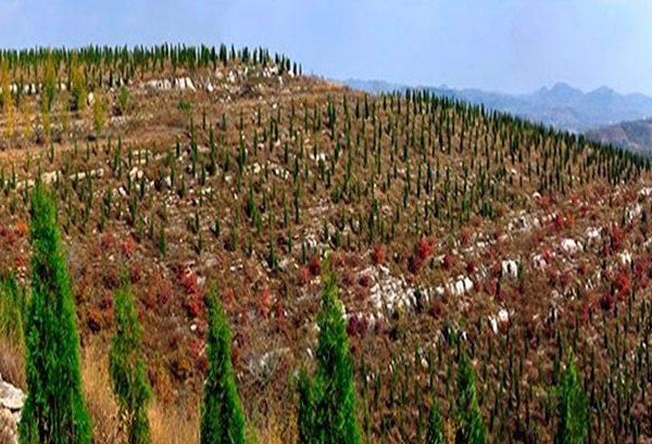 China reforestación