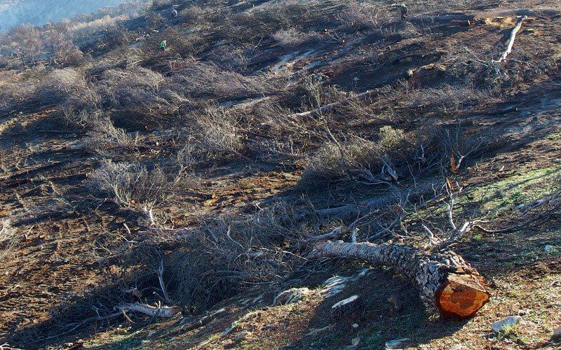 Control de la erosión tras el incendio