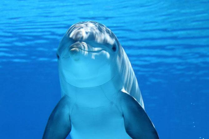 Delfín en el océano