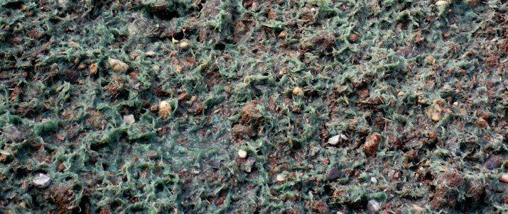 Hidro-mulch para hidrosiembras
