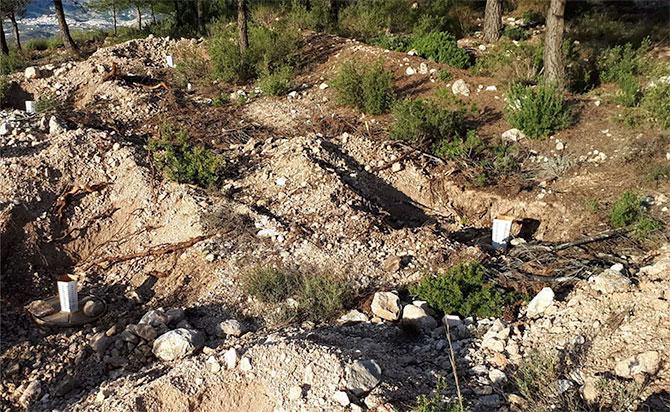 Reforestación La Muela