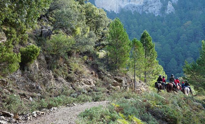 Paseos por el bosque a caballo